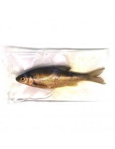 Konserverede Fisk